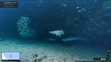 Sharks, Magic Point off Sydney, Australia