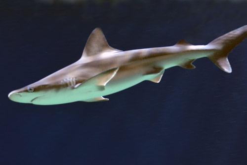 Virginia Living Museum  Chesapeake Bay Aquarium