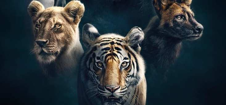 How to Watch Dynasties on BBC outside UK