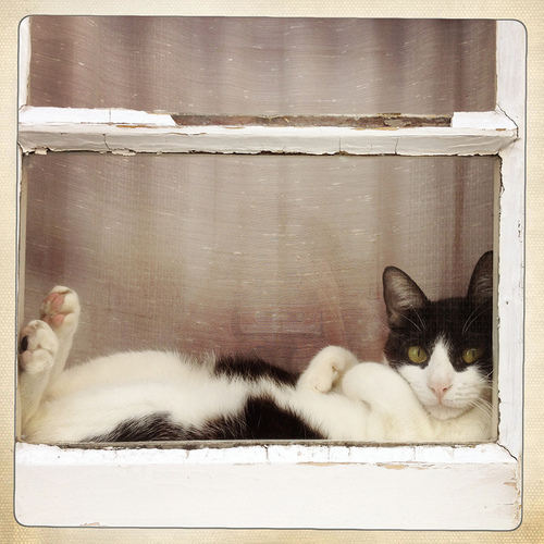 Kitty in Window from Beautiful Portals Tumblr