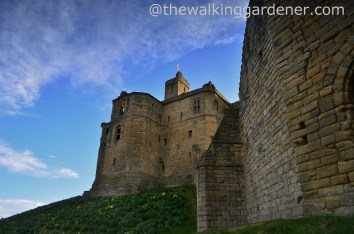 Warkworth Castle (3)