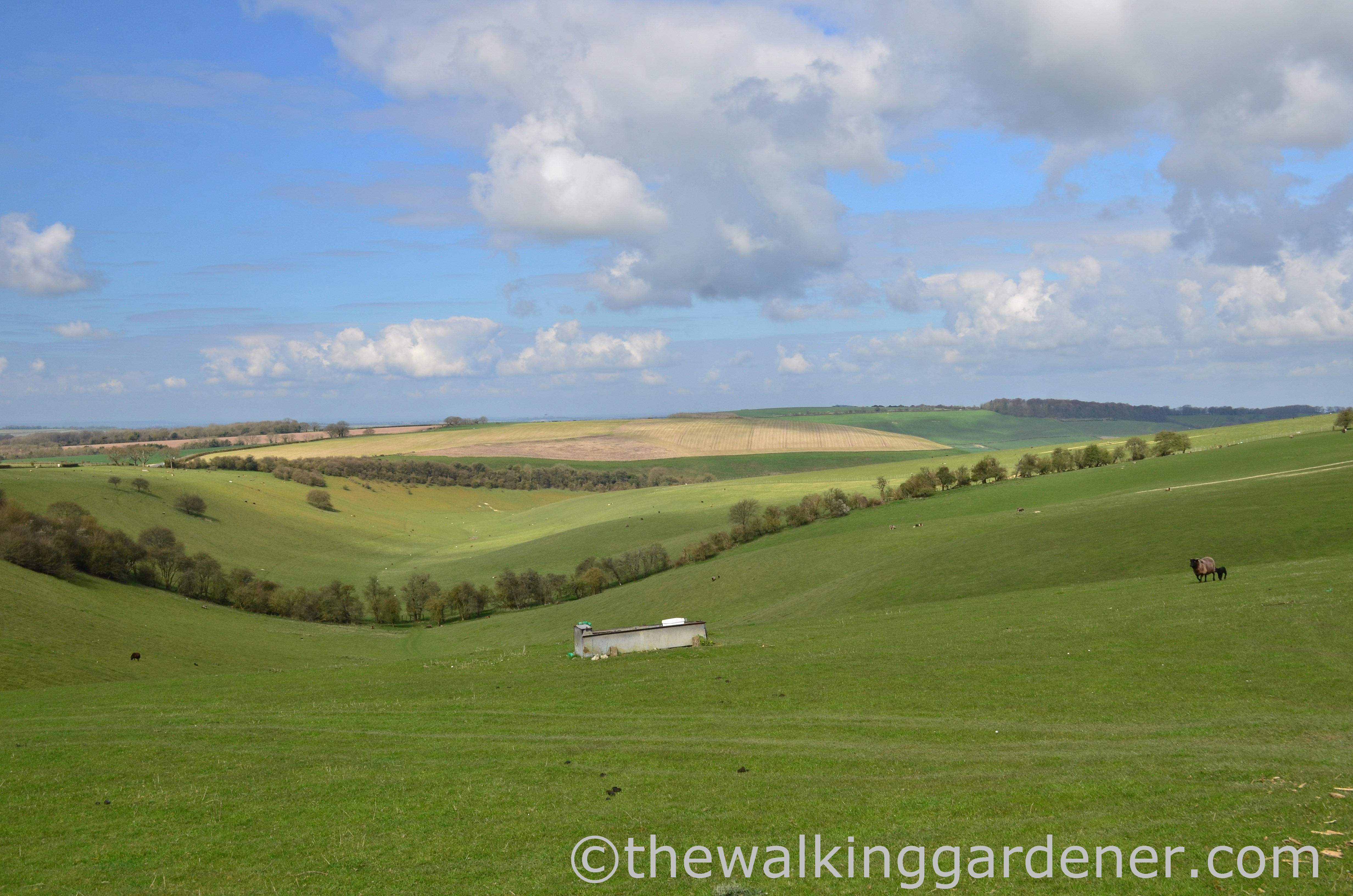 The South Downs Way: Day 2 – East Meon to South Harting
