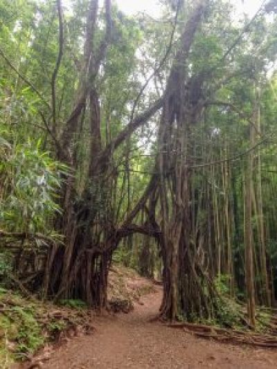 manoa falls natural doorway entrance trees