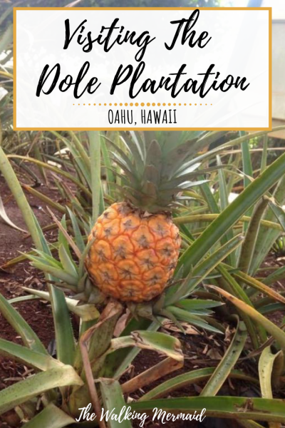 dole plantation pineapple overlay pinterest pin image