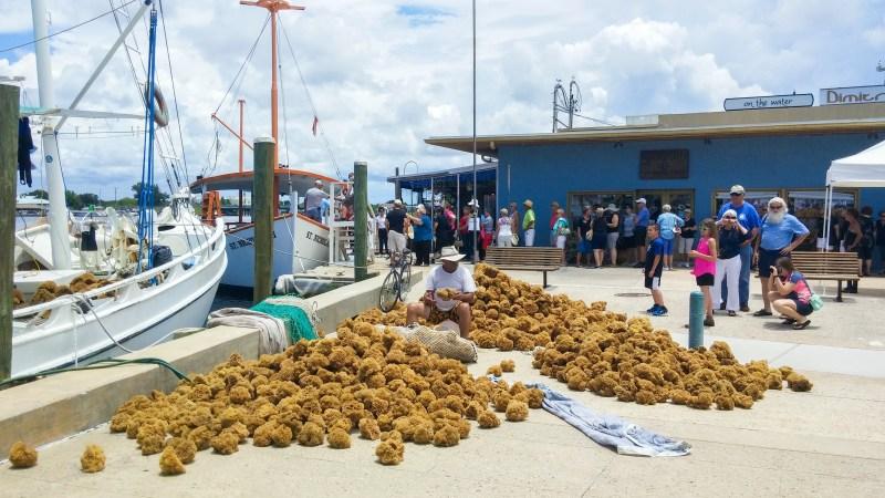 sponges at the sponge docks at tarpon springs florida
