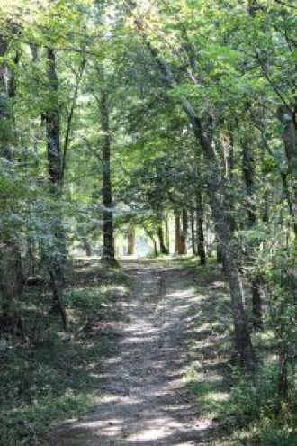 Trail around Piney Campground at Land Between The Lake