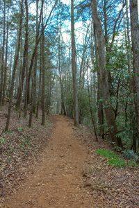 desoto falls trail