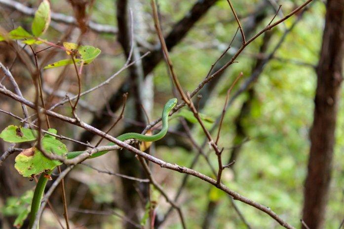 harpeth river state park garden snake