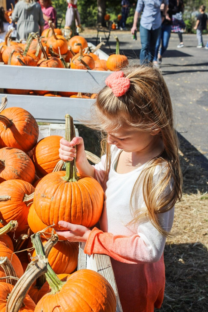 Fall Pumpkins Autumn