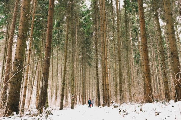 nature walks in snow forest pine trees kids hiking family