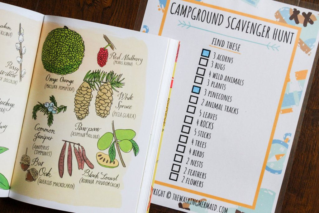 camping scavenger hunt pinecones books on the floor printable laminated