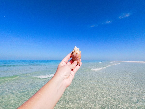 seashell at beach st pete petersburg florida
