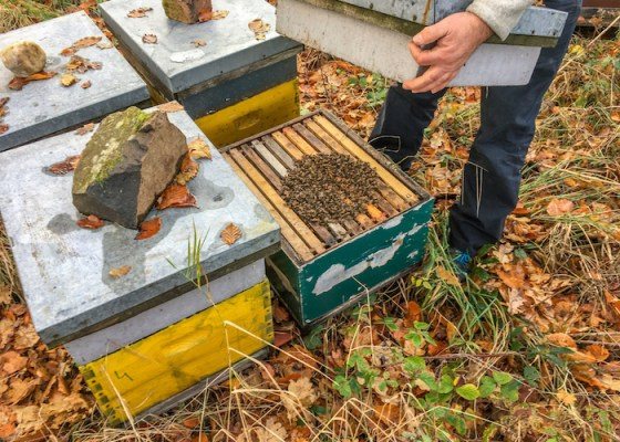 Bees clustered for winter in Scotland