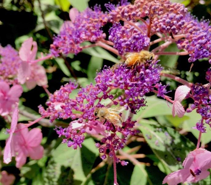 A New Zealand Honey Bee