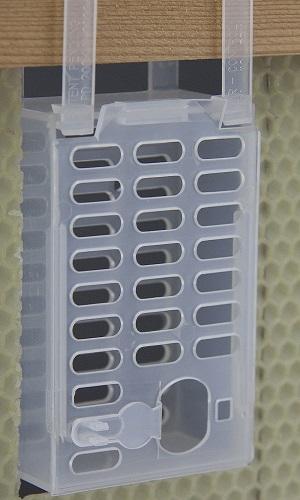 Queen cage for varroa control