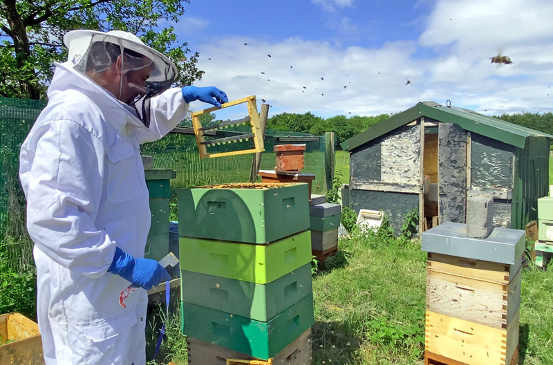 Steve with his cell builder hive