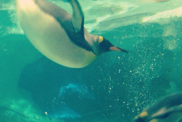 Penguins at Sea World on the Gold Coast