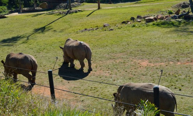 Animals at Australia Zoo