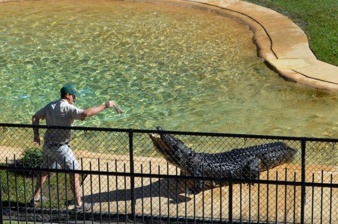 Crocodile Show at Australia Zoo