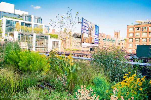 High Line Garden Chelsea NYC