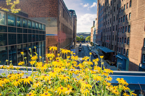 Flowers on High Line Chelsea NYC
