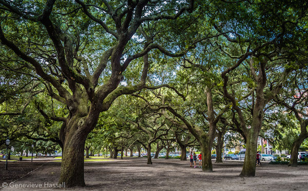 Angel Oaks at White Point Park Charleston SC