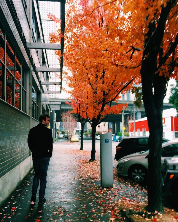 Autumn leaves in Melbourne