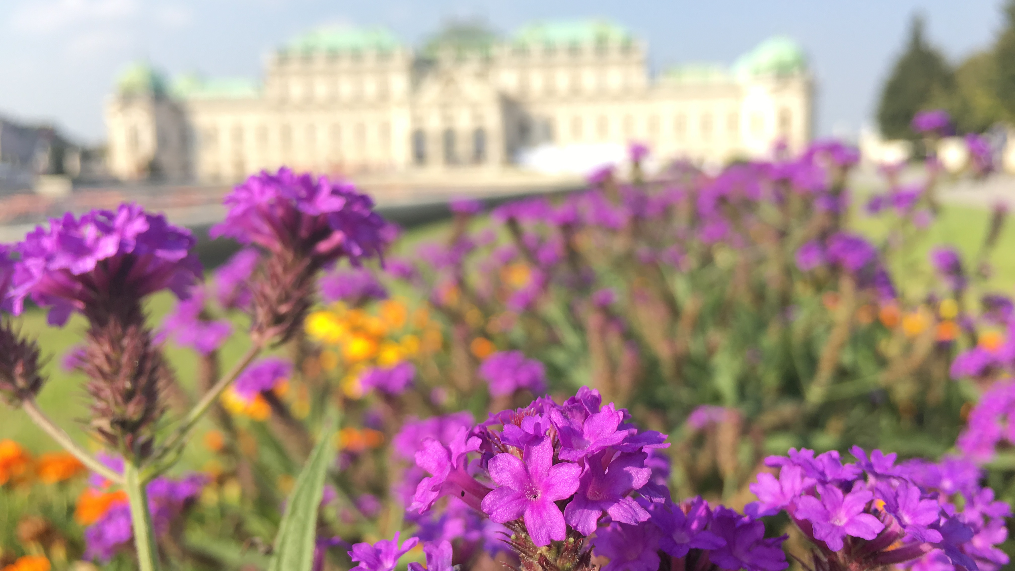 20+ Instagram Worthy pictures from Belvedere Palace, Vienna