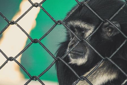 Bad Treatment of animals