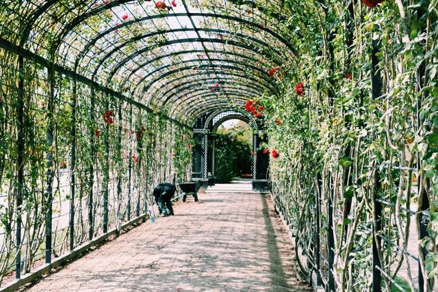 hallways in schonbrun garden.jpg
