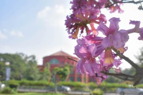 Cubbon Park Flowers