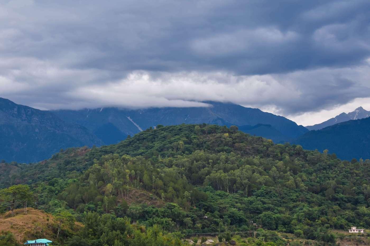 Dhauladhar | Palampur Tea Gardens