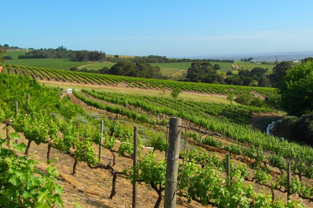 Zevenwacht Wine Estate in Stellenbosch, South Africa