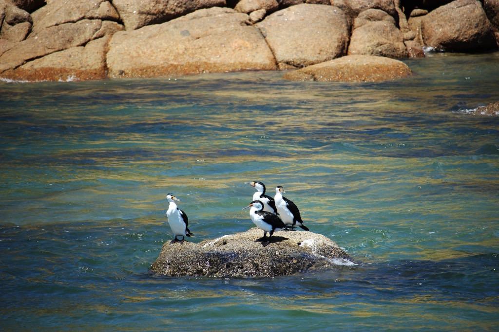 Travel Diary Granite Island Victor Harbor Birds