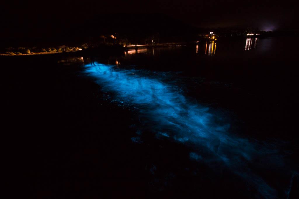 Bioluminescence, Tasmanië