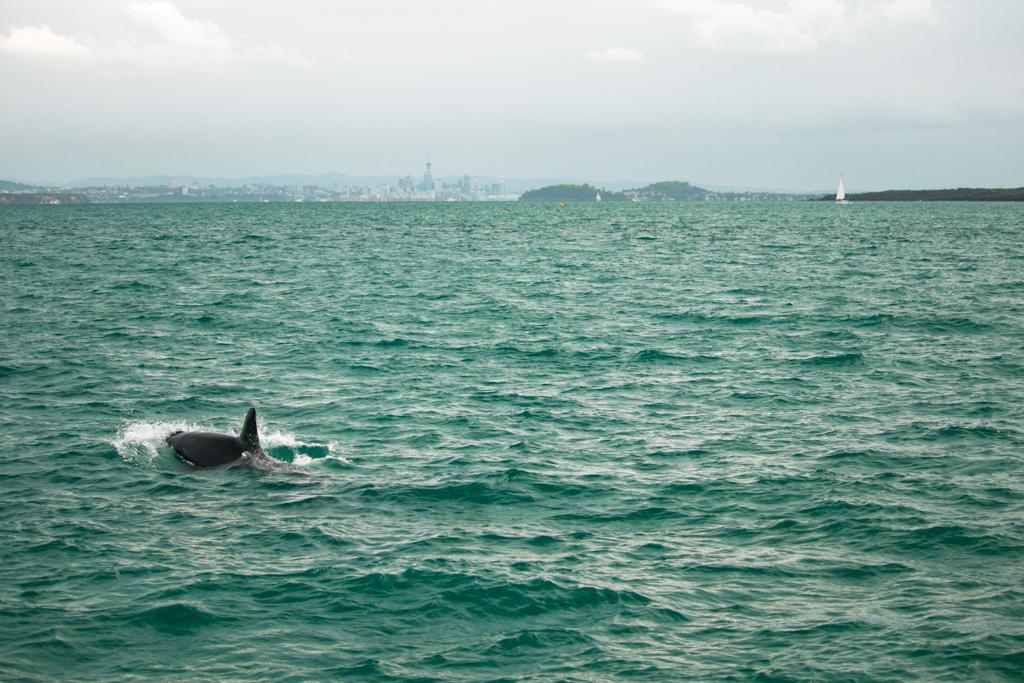Orka's | Auckland | Skyline | Auckland CBD | Wildlife
