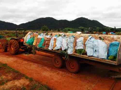 Banana Farm Life