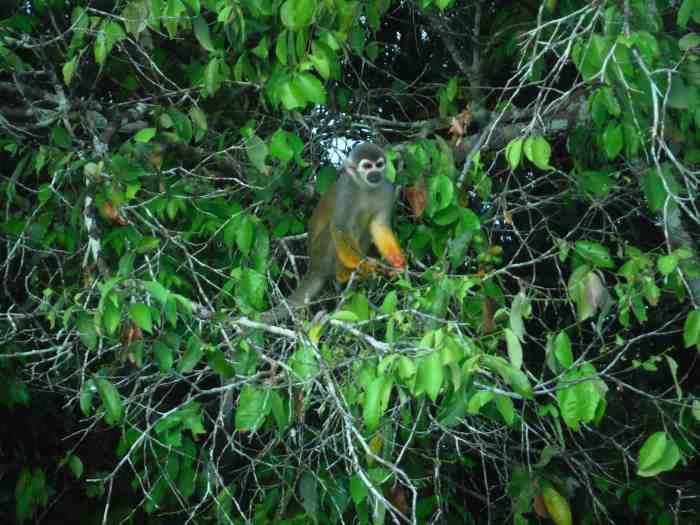 south america must visit places Amazon Rainforest ecuador