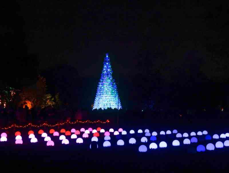 Kew Gardens Christmas