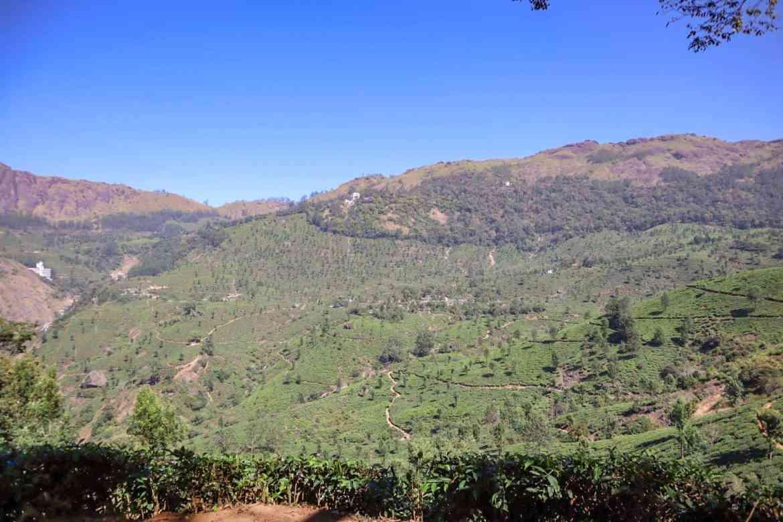 2 month India itinerary, Munnar Tea Plantations