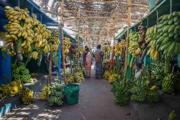 Madurai Banana Market