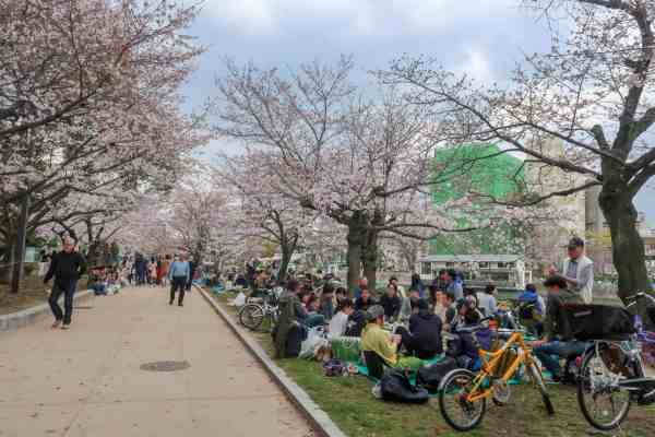 best place for Cherry Blossoms in Japan, hiroshima peace park cherry blossom