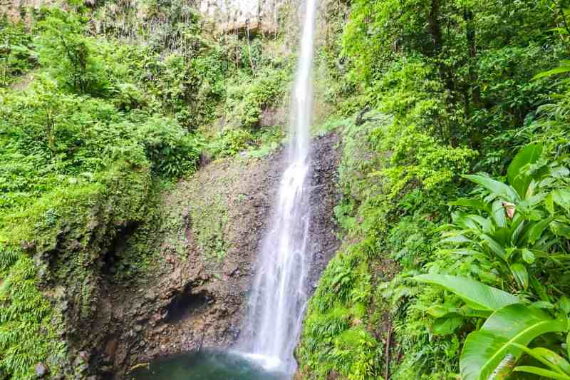 middleham waterfall in Dominica in middle of rainforest | unique things to do in Dominica