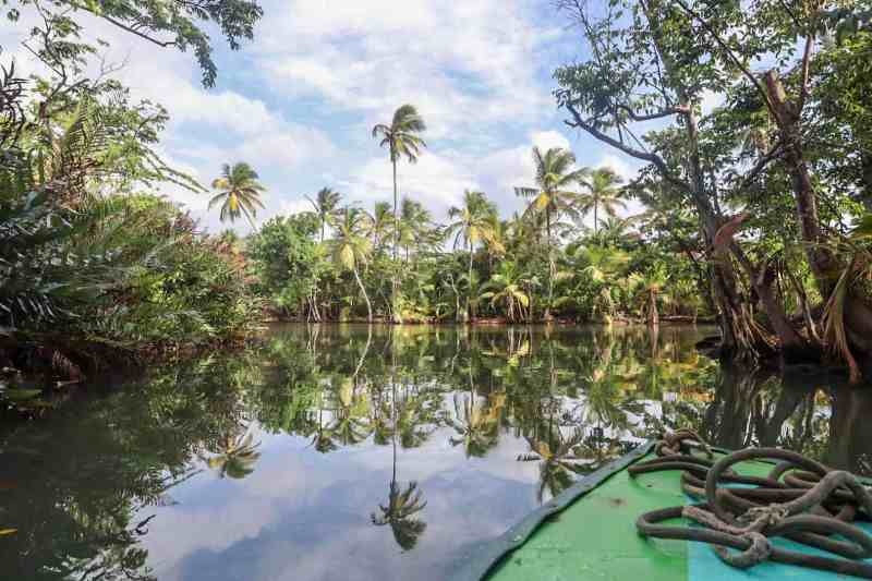 dominica travel guide, boat on indian river cruise with palm trees