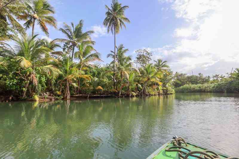 dominica day tours, indian river boat tour with palm trees dominica