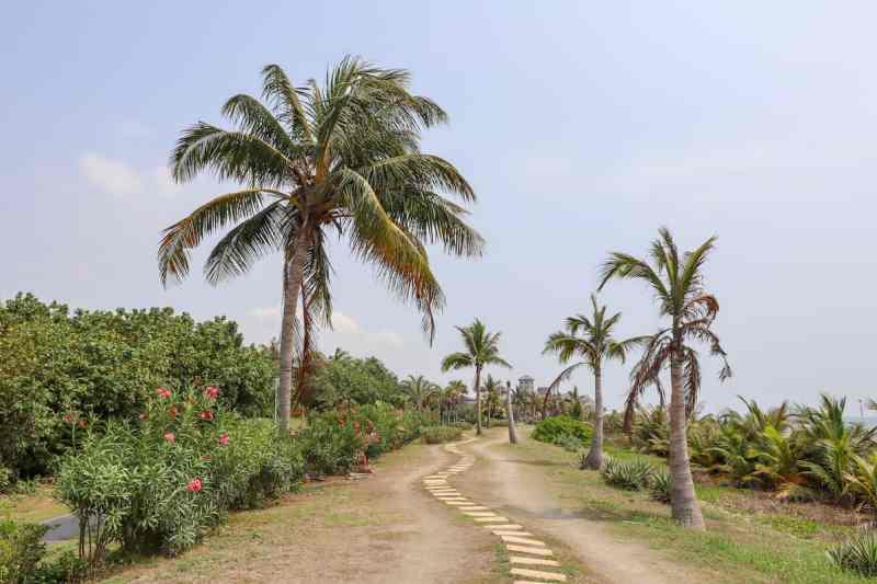 Kaohsiung to Cijin Island, Cijin Island sandy path with palm trees by beach