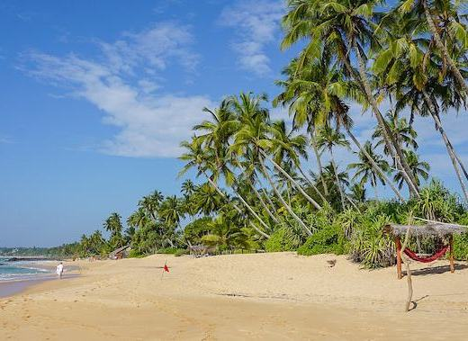 beach with palm trees and blue sky | best places to visit in Sri Lanka