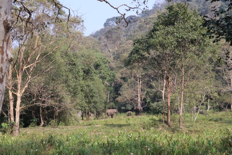 wild elephants in Thekkady National Park | best places to visit in India