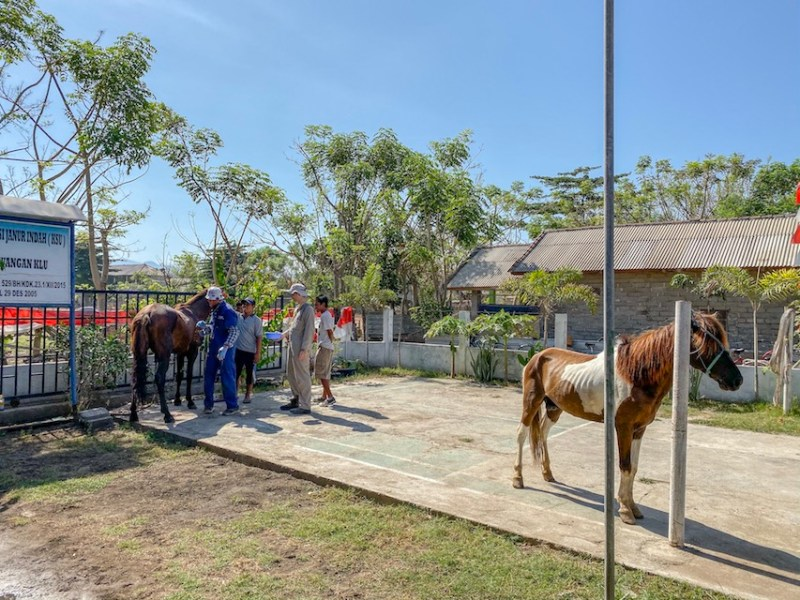 Horse Clinic on Gili T
