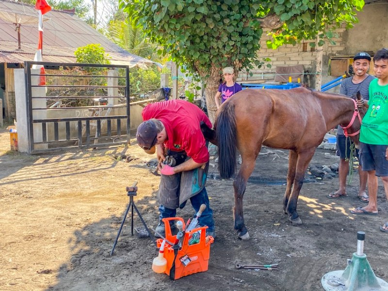 Horse Clinic Farrier on Gili T